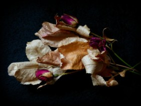 Dry Thorns