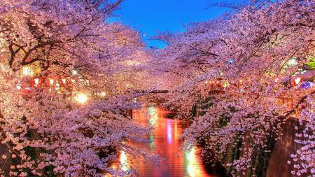 Blossom Ballet