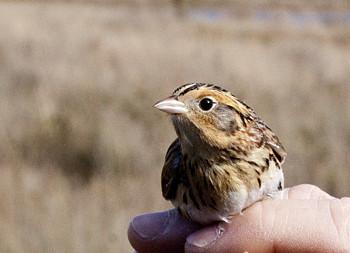 sparrow lights on hand