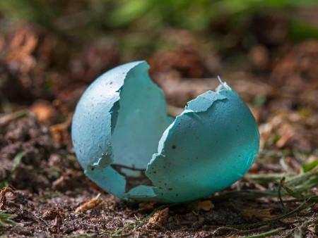 scattered blue fragments