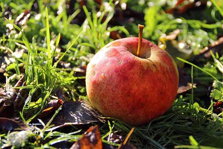 apple-on-the-ground