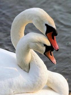 afloat together.jpg