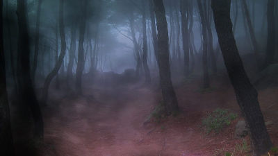 misty morning walk.jpg