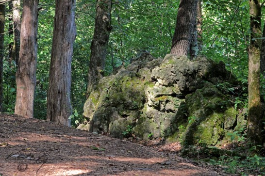 Runge Walk - Moss Rock Trace