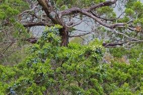 Lichen Mossy Hike_10