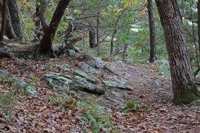 Lichen Mossy Hike_11