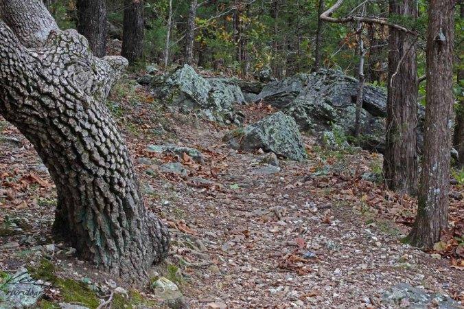 Lichen Mossy Hike_5