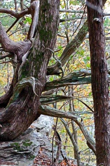 Lichen Mossy Hike_8