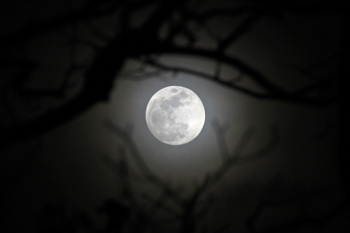 Moon Over the Hollow