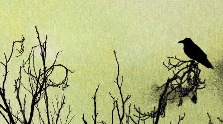 dusk of falling leaves
