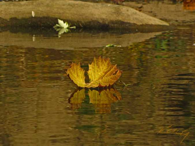 dry leaf floats away.jpg