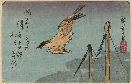 erratic bird's flight_2