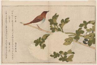 robin searching the garden