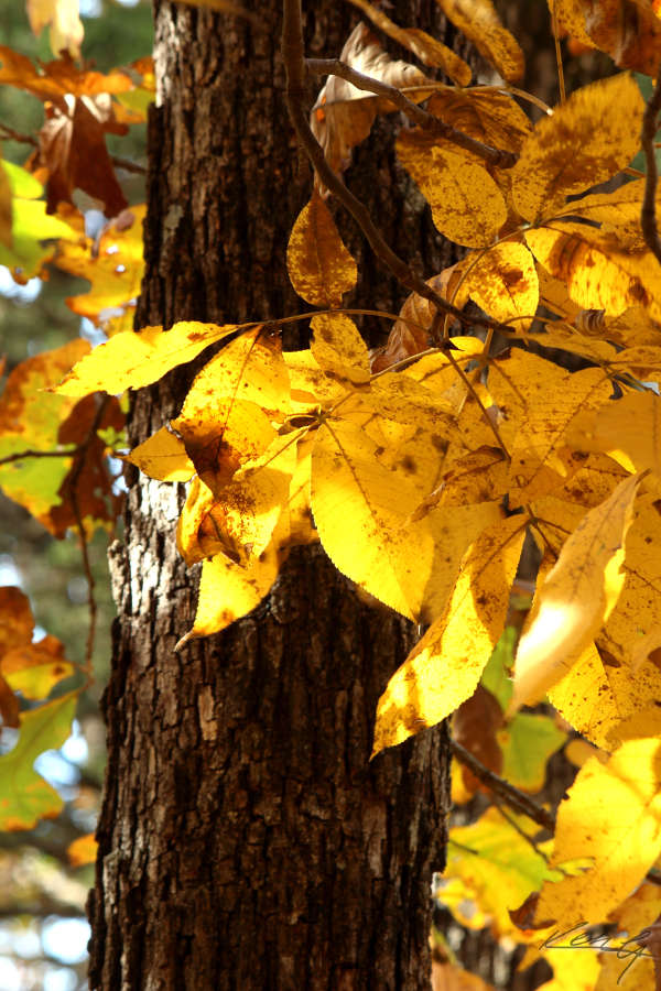 Fall Color, Finally_13