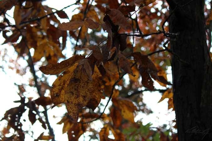 Fall Color, Finally_14
