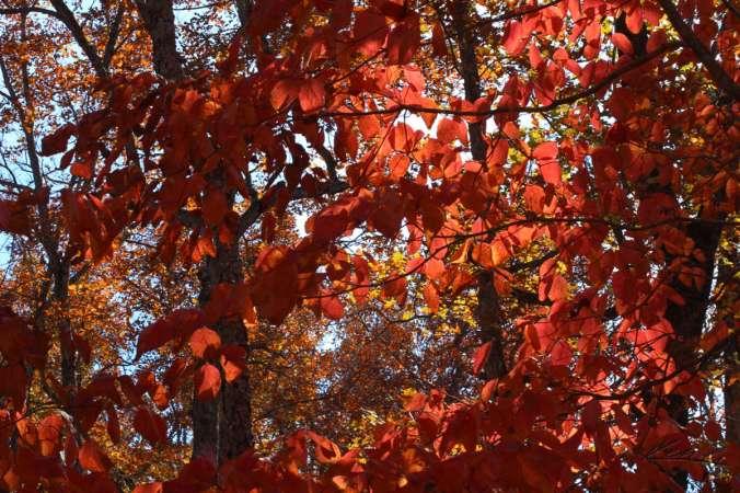 Fall Color, Finally_2