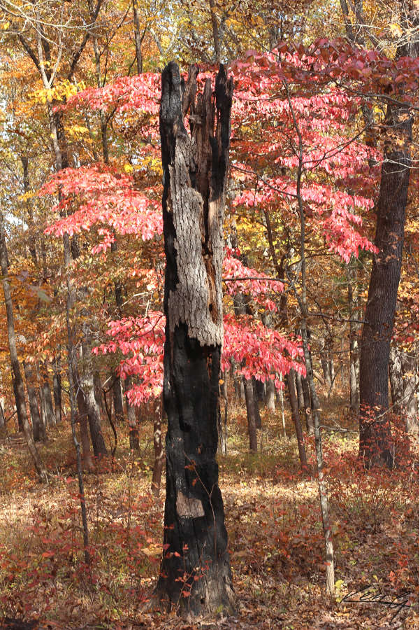 Fall Color, Finally_3