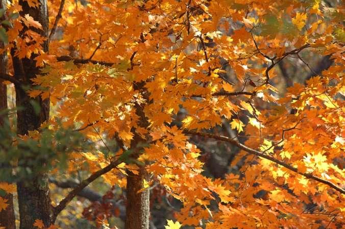 Fall Color, Finally_4