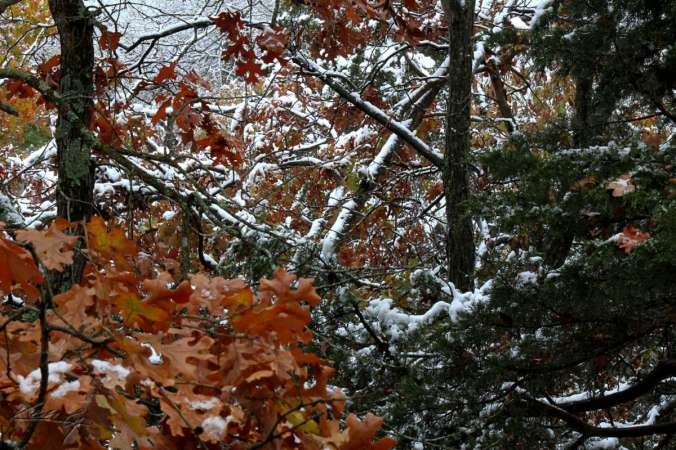 Falling for Winter_1