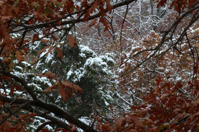 Falling for Winter_2