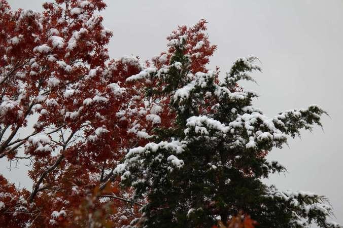 Falling for Winter_4